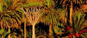 Der Drachenbaum von Castro